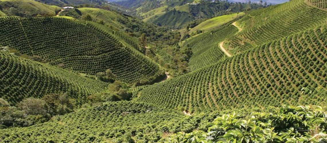 Peru-coffee-plantation-750x400